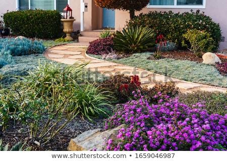 Stockfoto: Sappig · steen · tuin · terras · textuur · natuur