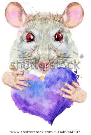 Acuarela portret alb şobolan violet inimă Imagine de stoc © Natalia_1947