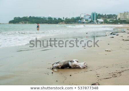 Drowned dead dog after the storm Stock photo © galitskaya