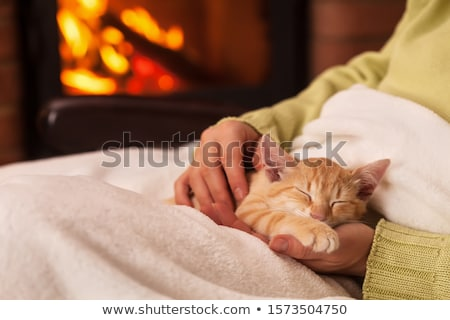 Woman hands caressing a sleeping kitten in front of the fireplac Stock photo © ilona75