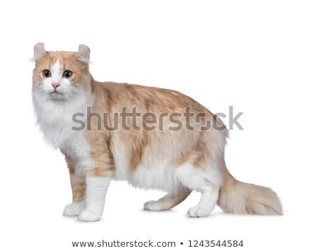 スーパー ハンサム 成人 赤 白 アメリカン ストックフォト © CatchyImages