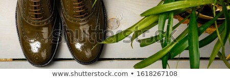 Green lacquered oxford shoes on wooden background near flower pot. Top view. Close up. Copy space Stock photo © Illia