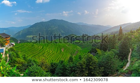 Panoramic view of the cascading rice terraces Stock photo © galitskaya
