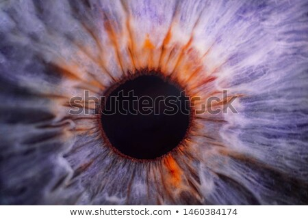 Close-up of eyeball Stock photo © Balefire9