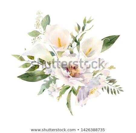 Beyaz zambak siyah soyut sanat yaprakları Stok fotoğraf © teusrenes