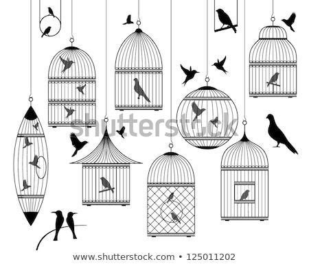 Foto stock: Pássaro · silhueta · preto · branco · desenho · antigo