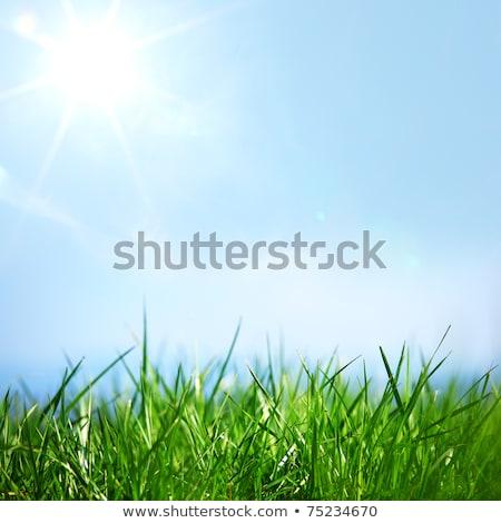 field of green grass over blue sky stock photo © vkraskouski