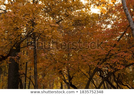 Orange leaf on a tree in winter setting stock photo © 3523studio