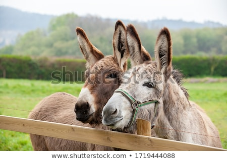 two donkeys stock photo © ivonnewierink