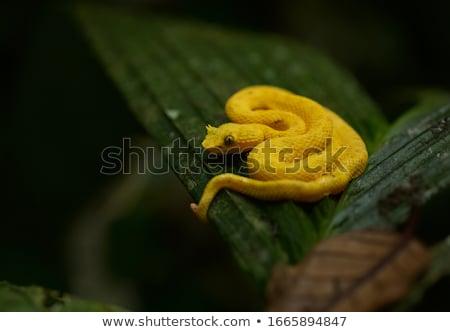 ресниц подробность желтый зеленый растительность аннотация Сток-фото © prill