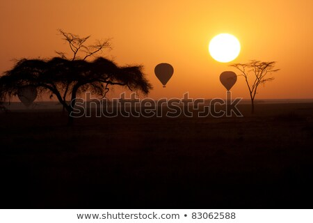 Hot air baloon over the Serengeti National Park Stock photo © ajlber