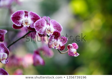 Pink flowers under sunshine in spring stock photo © kawing921