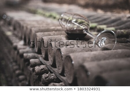 wine bottles in cellar stock photo © photosil
