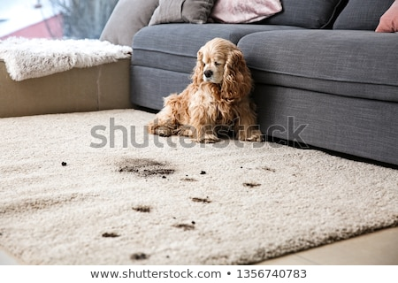 Tapis chien mensonges beige aspirateur Photo stock © ssuaphoto