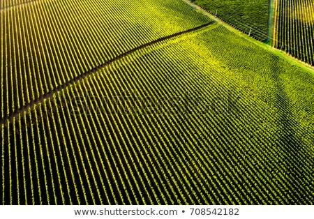 мнение виноградник полях Молдова небе природы Сток-фото © kornienko