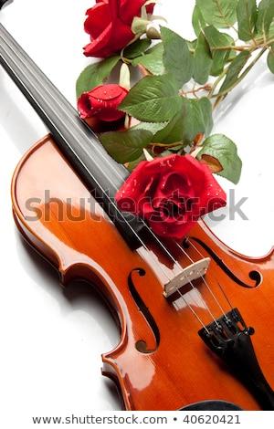 rosas · vermelhas · violino · flor · amor · folha · vela - foto stock © JanPietruszka