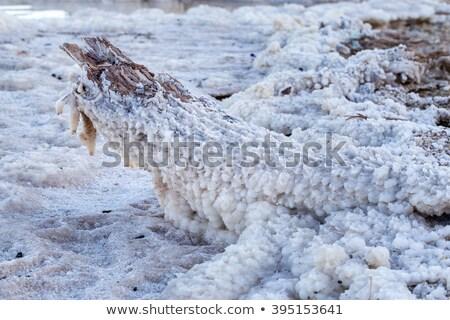 Dead Sea - Salt Stem Stock photo © eldadcarin