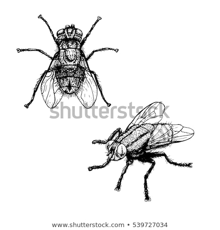 Fly insect sketch symbol Stock photo © Hermione