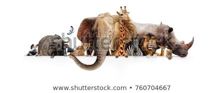 Hayvanat bahçesi hayvanları karikatür ağaç doğa manzara ağaçlar Stok fotoğraf © adrenalina