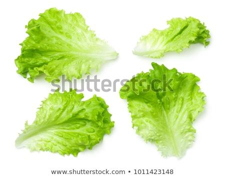hoja · frescos · lechuga · aislado · blanco · alimentos - foto stock © taden