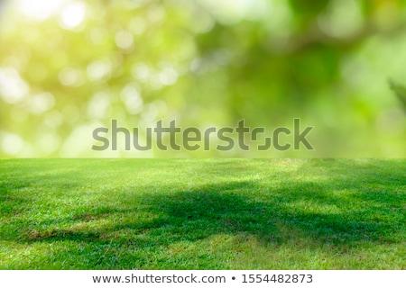 新鮮な · 緑の草 · 春 · シーズン · 画像 · 浅い - ストックフォト © stevanovicigor
