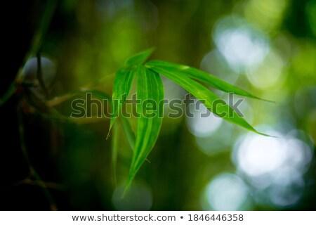 green grassland with bamboo Stock photo © elwynn