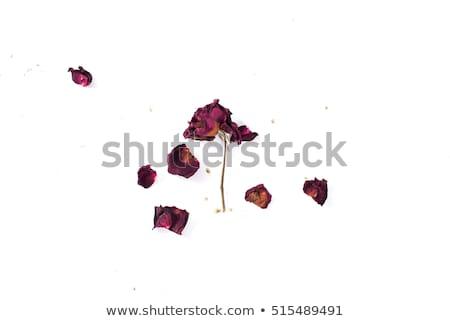 aszalt · rózsa · virág · virágok · természet · levél - stock fotó © zia_shusha
