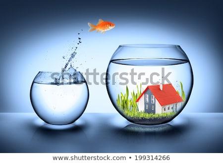goldfish new house stock photo © tilo
