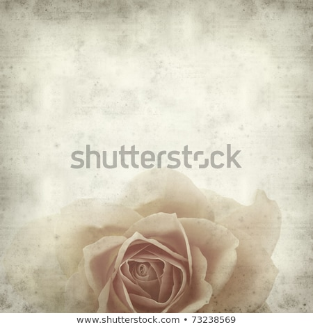 textured old paper background with single orange rose Stock photo © Tamara_K