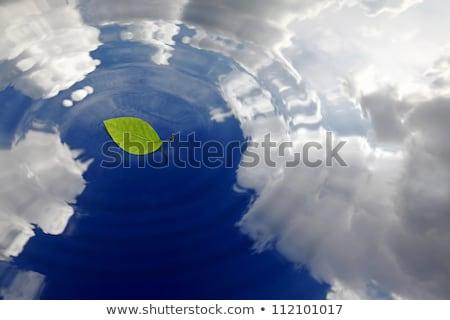 ぬれた · 湖 · 水生の · 植生 · 空 · 水 - ストックフォト © fesus