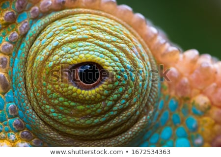 Stock photo: Eye of a Chameleon