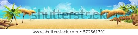 Tropikalnej plaży wektora palm wody krajobraz Zdjęcia stock © -Baks-