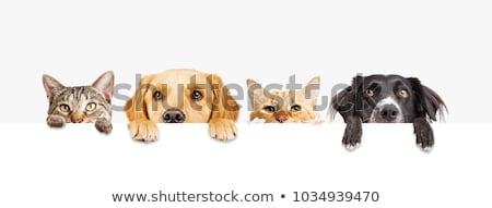 Cão gato juntos lado perfil olhando Foto stock © Lightsource