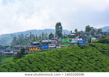 tea · India · tájkép · tavasz · fa · erdő - stock fotó © juhku