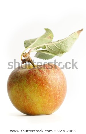 Eszik otthon megnőtt almák cím tábla Stock fotó © stevanovicigor