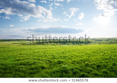 field of grass and perfect sunset stock photo © tetkoren