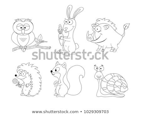 squirrel vector isolated artwork illustration clip art stock photo © vectorworks51