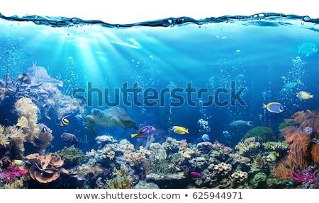 подводного сцена рыбы коралловый риф иллюстрация пляж Сток-фото © bluering