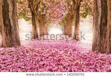 spring tree with pink flowers stock photo © day908