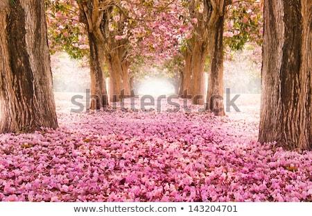 Stock fotó: Tavasz · fa · rózsaszín · virágok · stilizált · virágzó