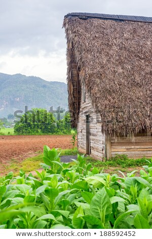 Typical barn on tobacco plantations Stock photo © CaptureLight
