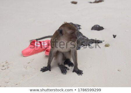 flip flops and monkey on the beach Stock photo © adrenalina
