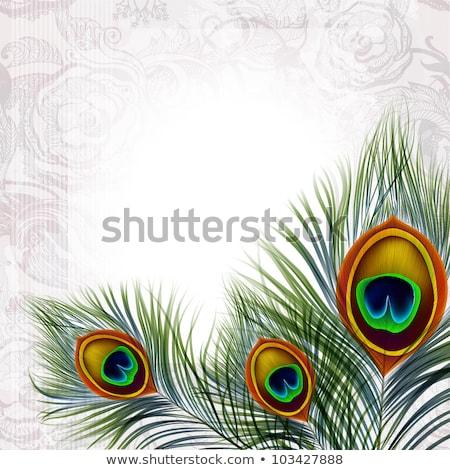 孔雀 羽毛 フレーム 実例 自然 青 ストックフォト © adrenalina