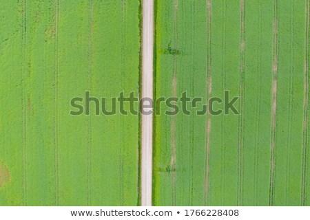 ポイント · 表示 · 栽培 · 麦畑 · 農業の · 農園 - ストックフォト © stevanovicigor
