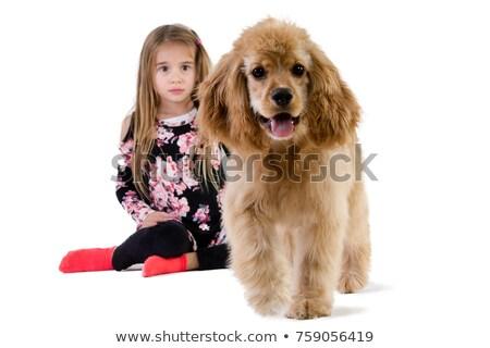 若い女の子 を見て 犬 徒歩 小さな ストックフォト © ozgur