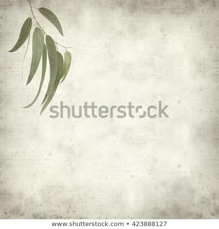 albero · vecchio · grunge · antichi · texture · carta · carta - foto d'archivio © rufous