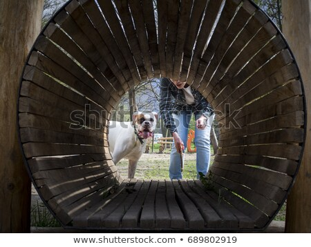 boxer in tunnel Stock photo © IS2