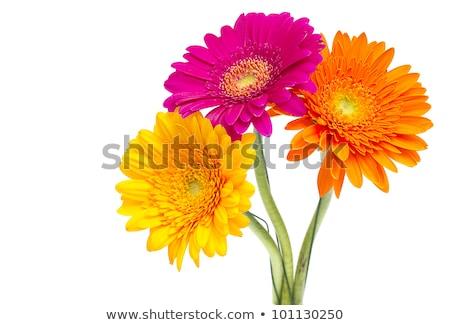красивой · цветок · капли · воды · лепестков · мелкий - Сток-фото © stephaniefrey