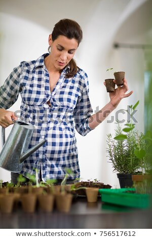 Pregnant woman spilling little plants Stock photo © IS2