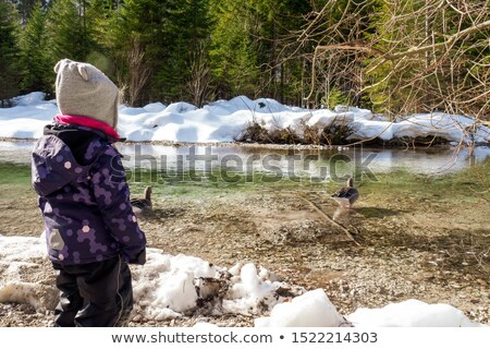 3 young girls looking in creek Stock photo © IS2